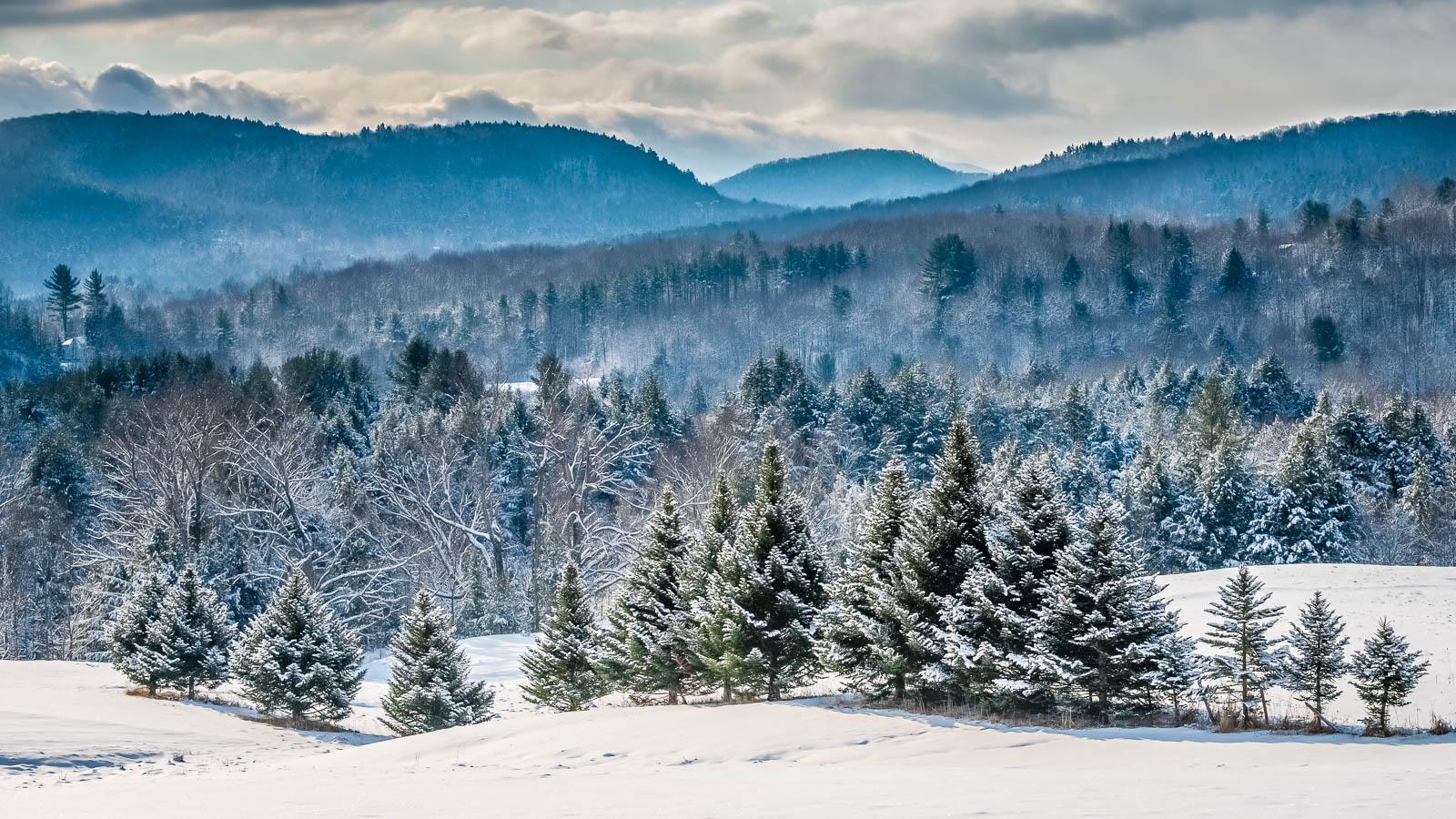 Vermont-Winter-Spruce